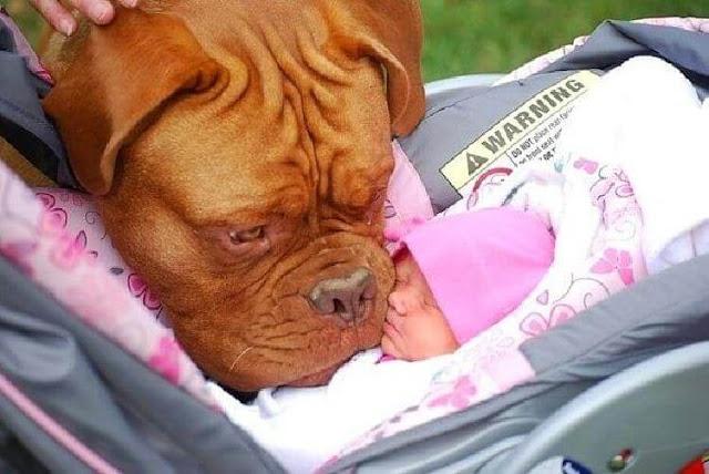 Доказательство того, что собаки — самые преданные друзья