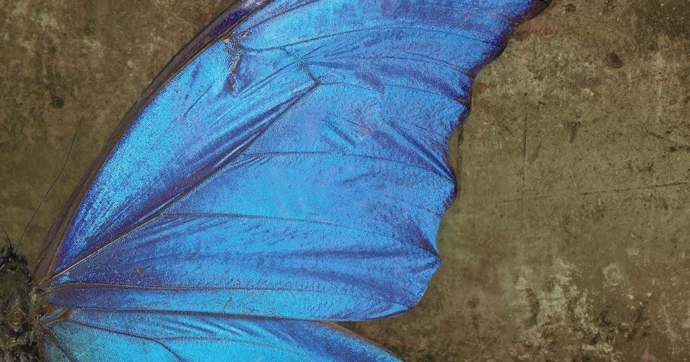 Resultado de imagen de reseña mariposas en la sombra gilly macmillan