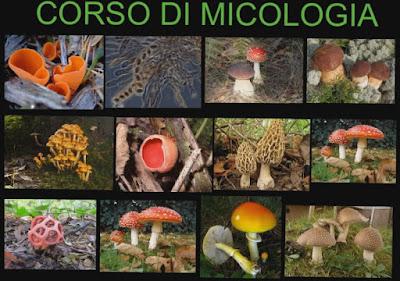 http://micologiaenzo.blogspot.it/2017/06/torna-alla-home-page-il-meraviglioso.html