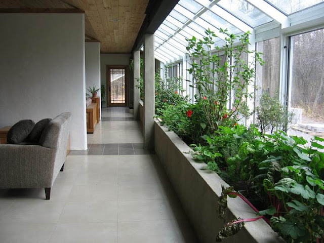 Best Plants To Grow Indoors