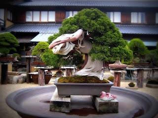 Another 800-Year-Old Bonsai Tree at Shunkaen