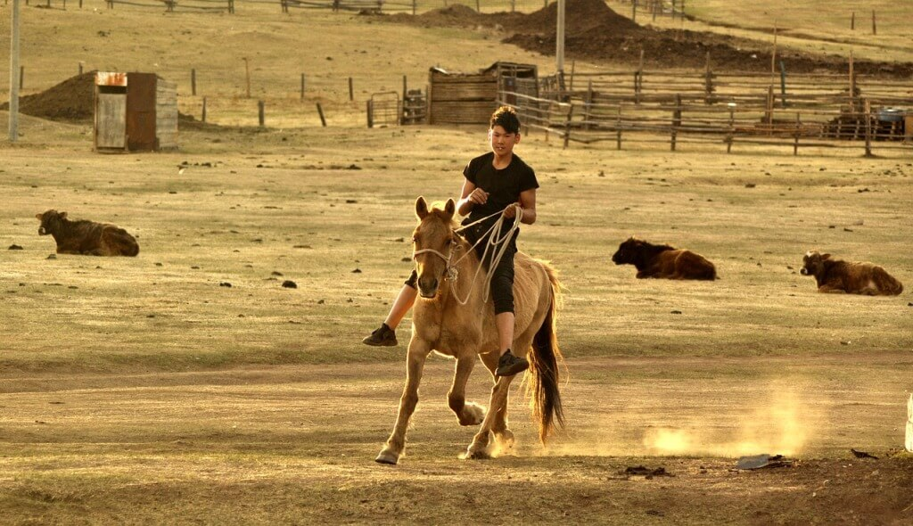 Practical and natural horsemanship: A challenge facing today's farrier