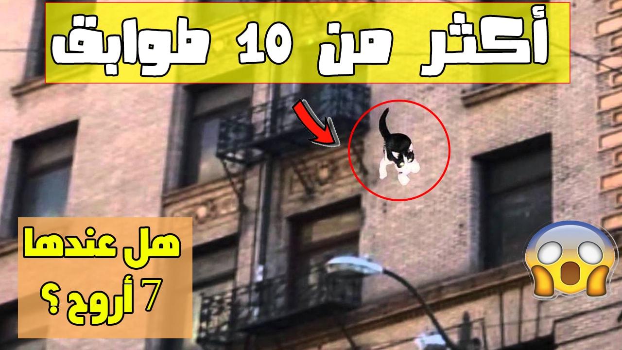 كيف تنجوا القطط بعد سقوطها من مكان مرتفع
