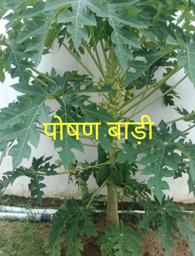 पोषण बाड़ी योजना (Poshan Badi Yojana)
