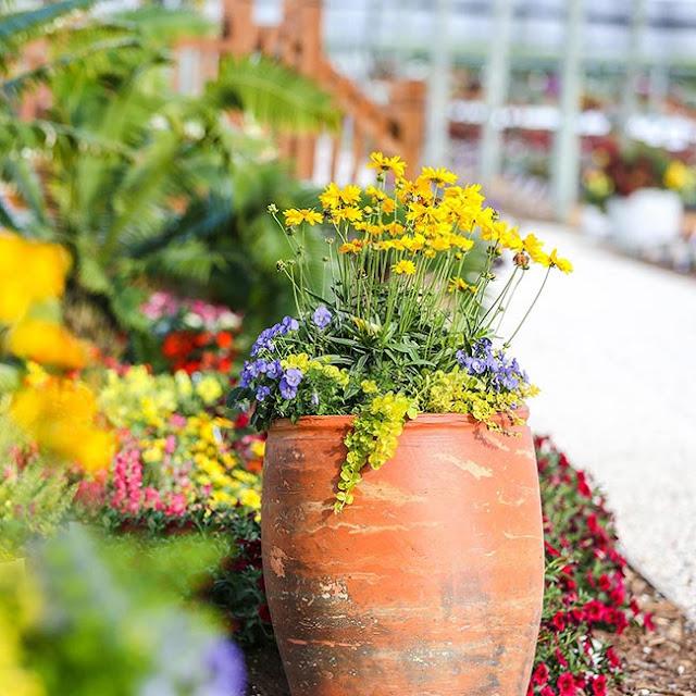 Contrasts Garden Pots