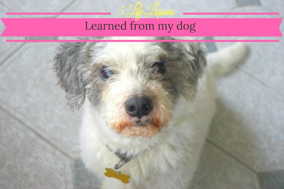 5 life lessons learned from my dog