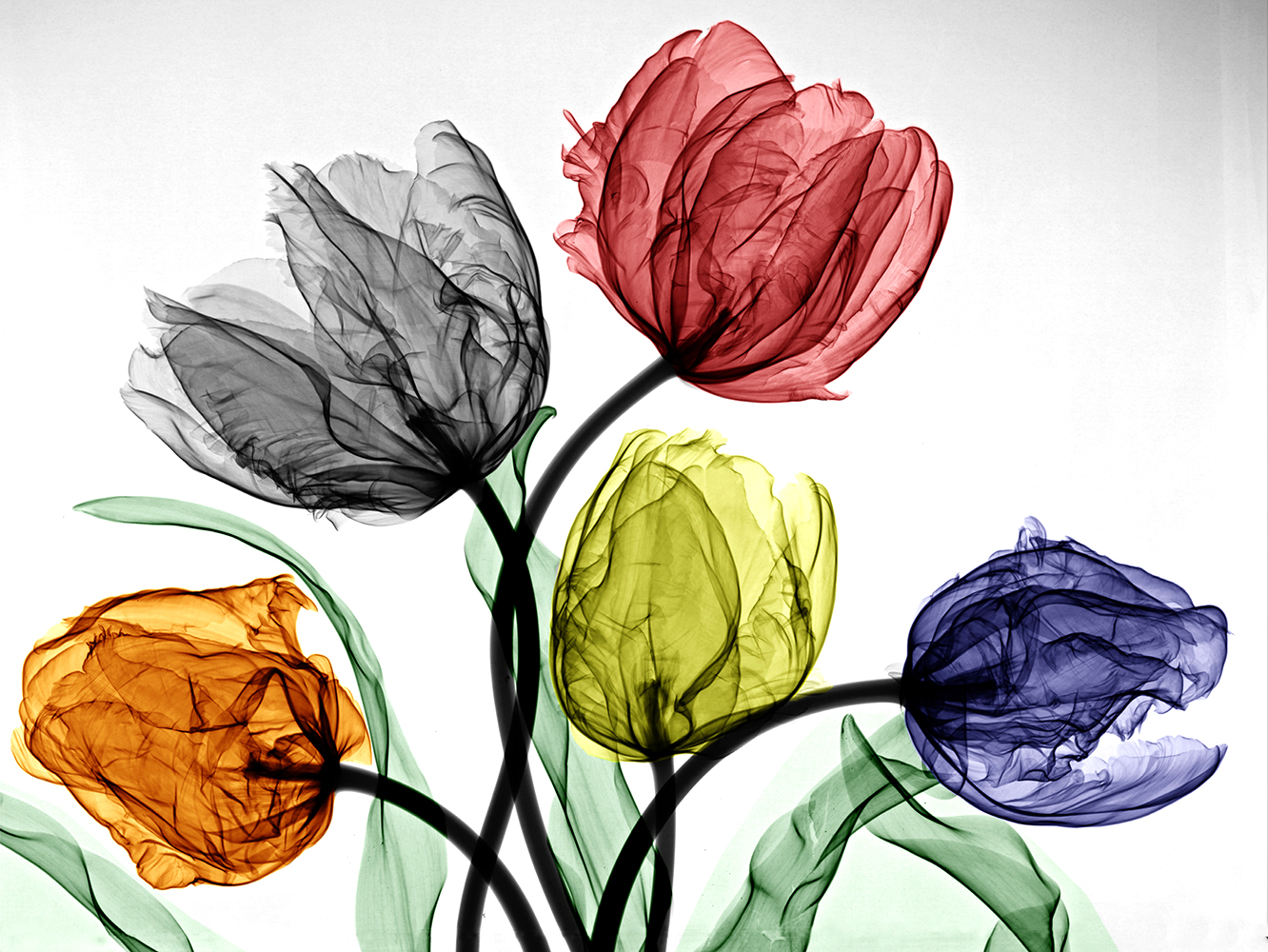 09-Parrot-Tulips-Arie-van-t-Riet-Colored-X-ray-Photographs-of-Nature-www-designstack-co