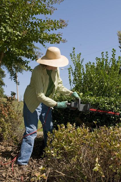 pruning%2Bhedge.jpg