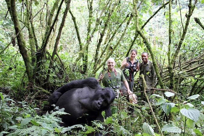 Penelitian Revenues from Gorilla Tracking Permits Increase Despite Rise in Price