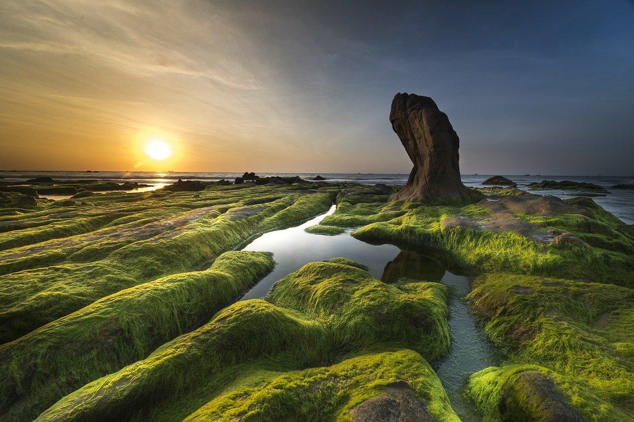 Green Algae Ultra Violet