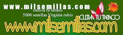 Cultiva tu Tabaco Es Facil Semillas de Virgini Rubio De calidad