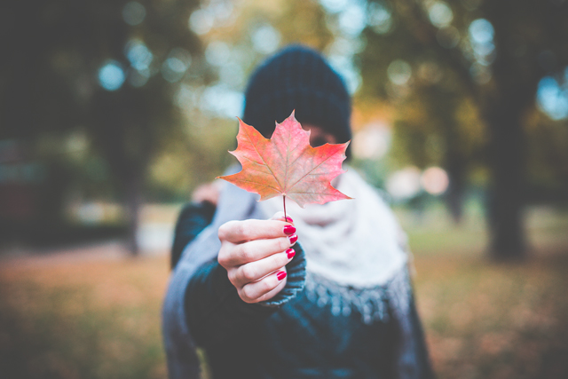 https://picjumbo.com/young-girl-holding-autumn-colored-maple-leaf-2/