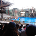 Nonton Aksi Seru Di Water World Universal Studio Singapore