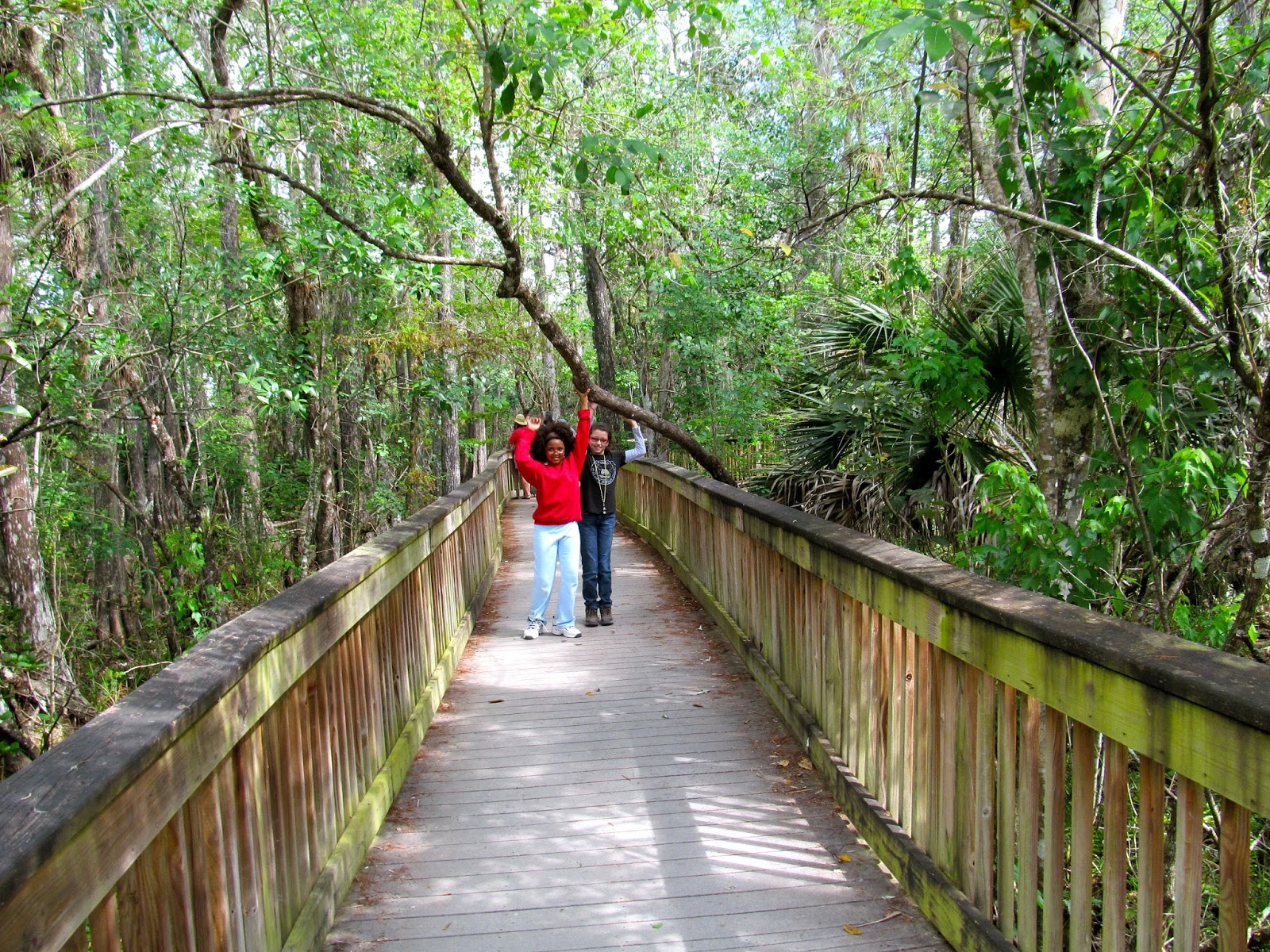 Kirby Storter Boardwalk - Big Cypress Swamp - Florida Everglades - Hiking