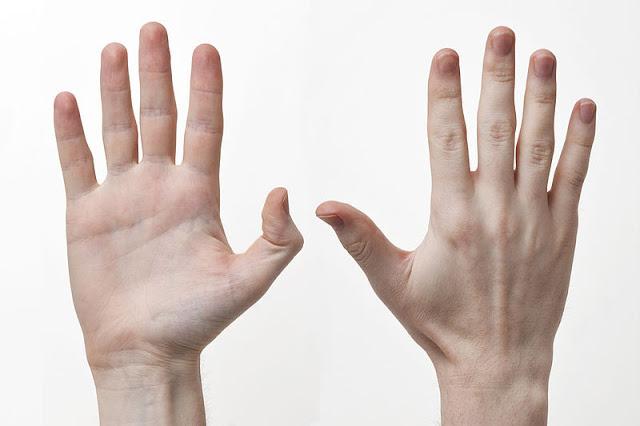 أهمية اليد في العمل وفي حياة الإنسان