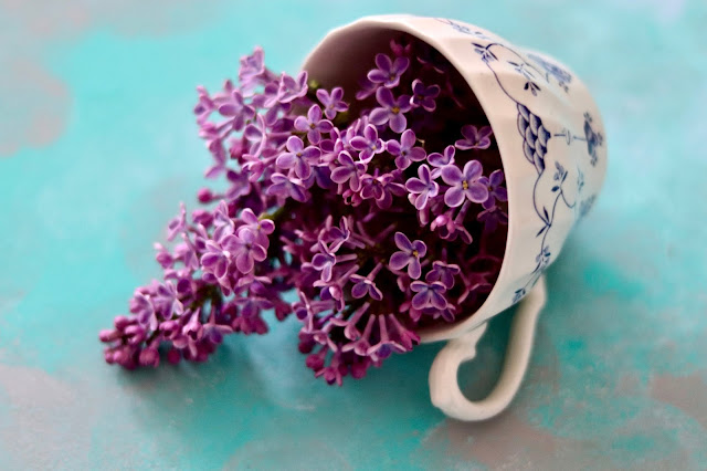 ☕️ herbata z bzu lilaka