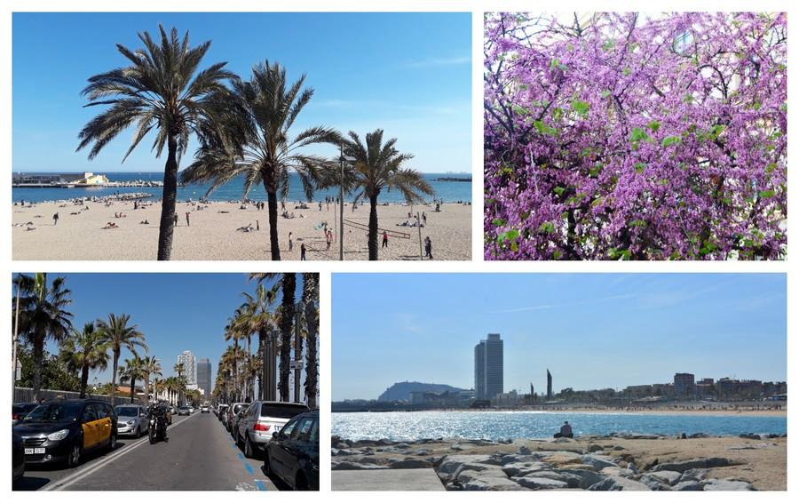 plage et palmiers à barcelone