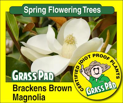 Brackens Brown Magnolia