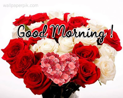 rose flower gulab fool good morning images new style