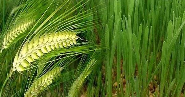 परम्परागत कृषि विकास योजना (पीकेवीवाई) के अन्तर्गत जैविक खेती को बढावा देने हेतु कृषि विभाग की योजना