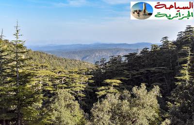 غابة شيليا