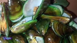 Contoh Hewan Mollusca Kerang Hijau