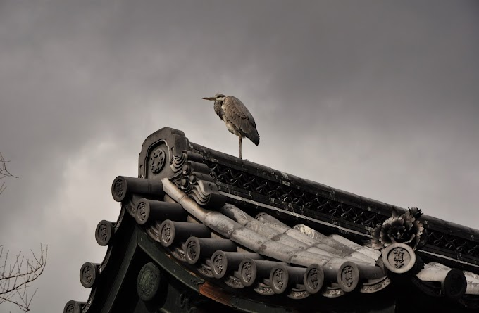 On the roof of the Higashihonganji Temple in Kyoto, Japan