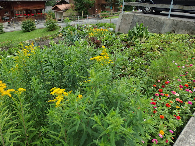 A small vegetable patch in Lauterbrunnen