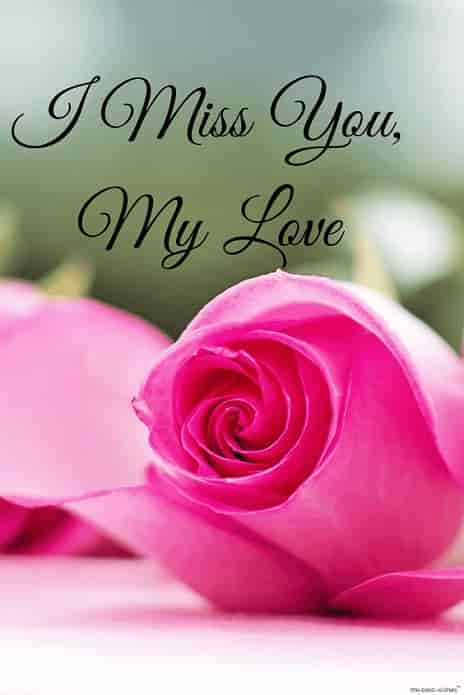 i miss you my love hd image with rose