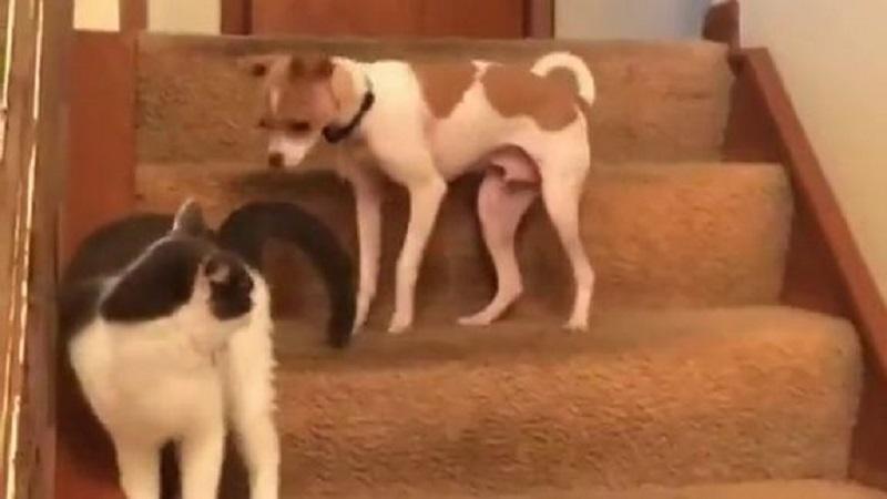 Σκύλος με λειτουργία Turbo....(βίντεο)