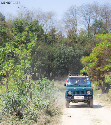 Jeep Safari at Pobitora Wildlife Sanctuary