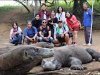 Terbongkar ! Inilah Kenapa Komodo Hanya Ada Di Indonesia