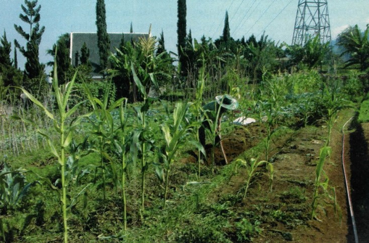 Lahan kebun