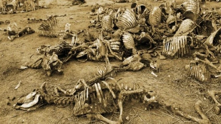 Story of an island where dead bodies are scattered everywhere