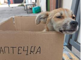 Женщина попросила меня помочь больному бездомному щеночку, а ночью после клиники бросила его на улице