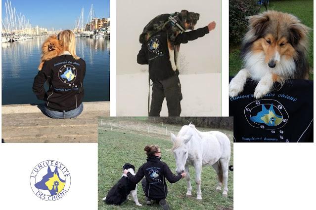 educateur chien agility