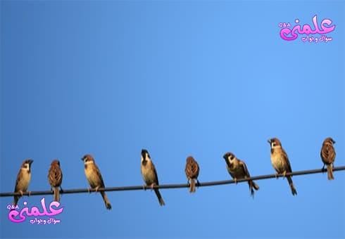 لماذا لا تتعرض الطيور للصعق بالكهرباء أثناء الوقوف على خطوط الكهرباء؟