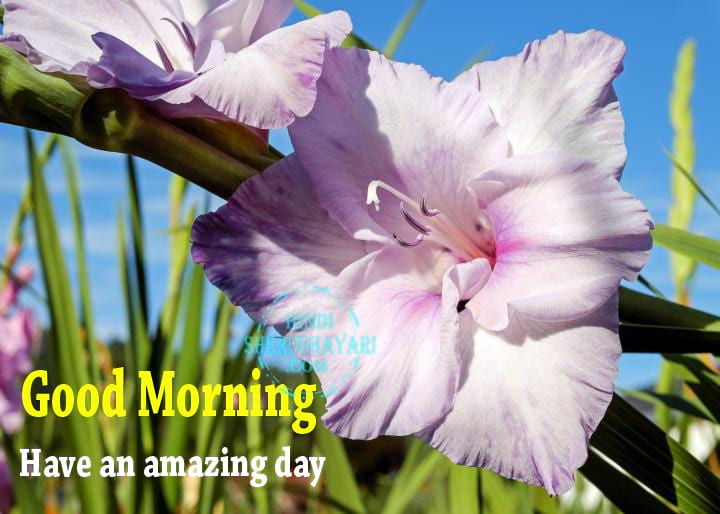 Good Morning Flowers For Friends