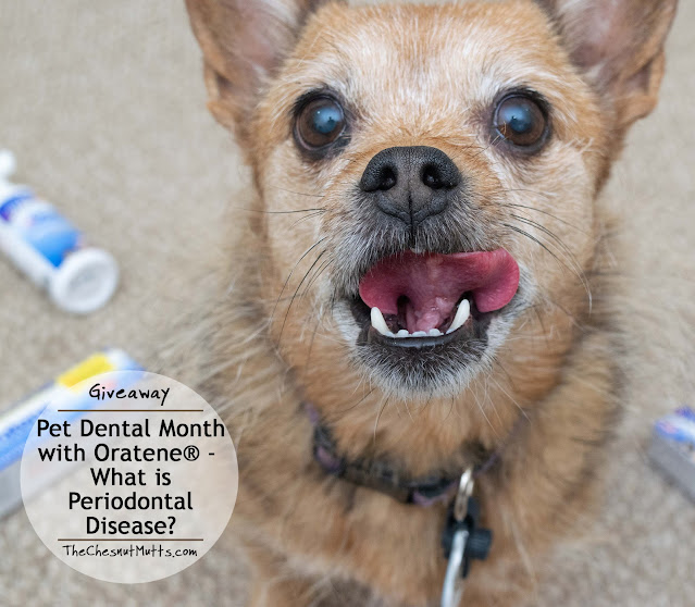 Giveaway: Pet Dental Month with Oratene® - What is Periodontal Disease?