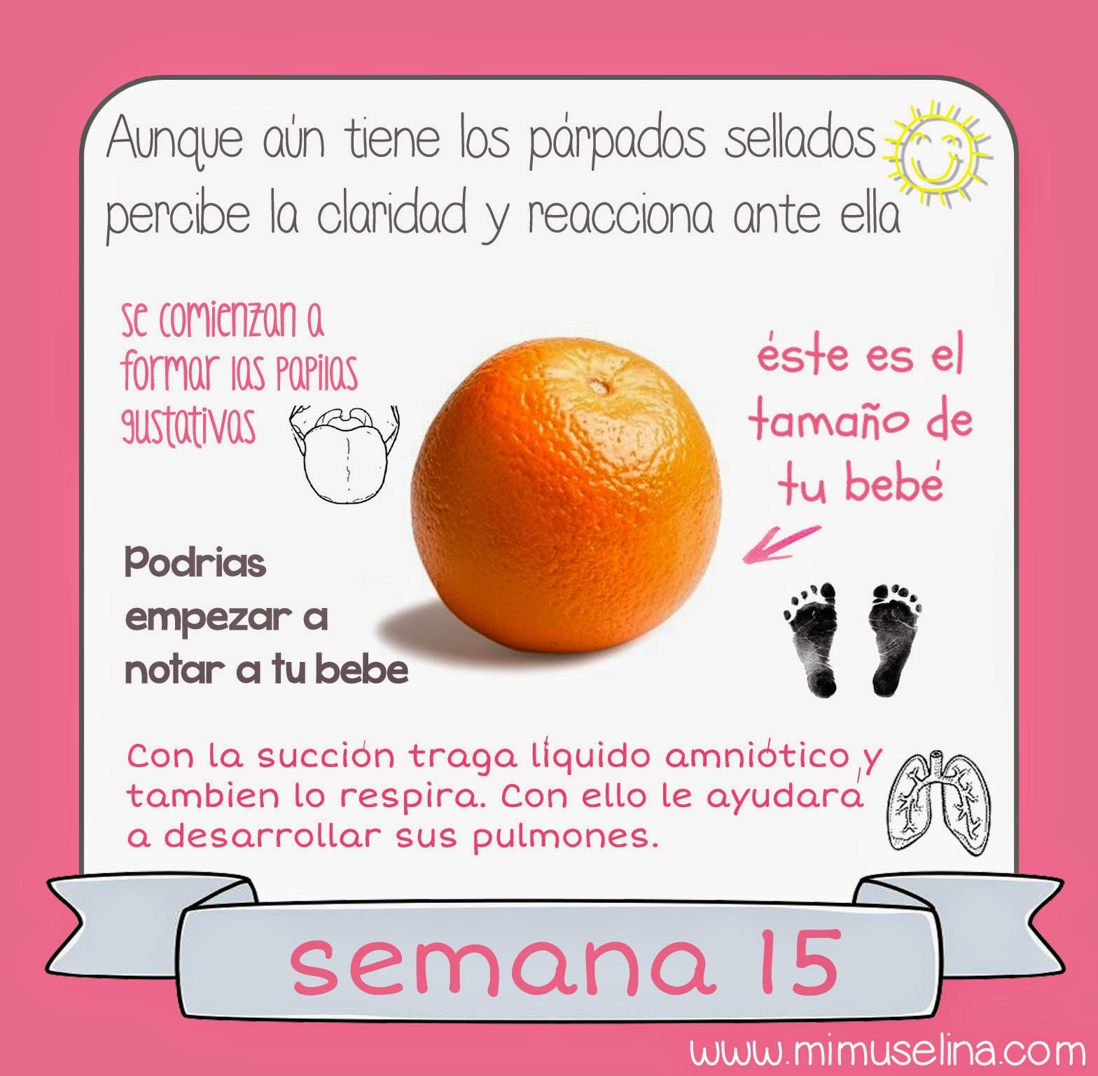 Semana 14 embarazo fruta