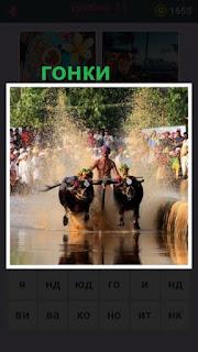 655 слов происходят гонки на быках по воде с погонщиком 11 уровень