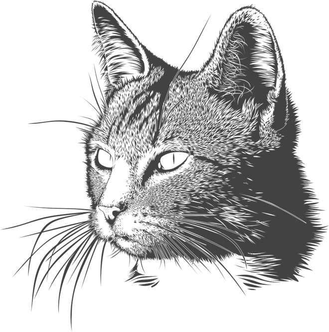A História do Gato do Domingo