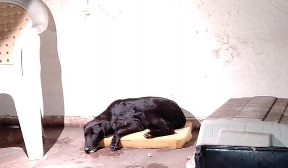 Δολοφονία ζώων με φόλες στη Λάρυμνα Φθιώτιδας
