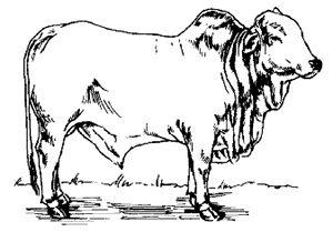 Vande Gau Maataram: THE INDIAN COW AND ECONOMIC SUPERPOWER