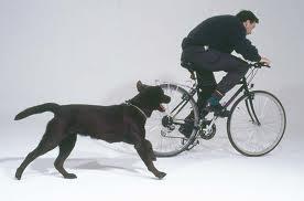 di kejar anjing
