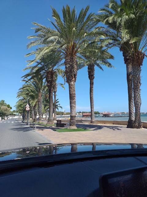 Palmtrees along Santiago de la Ribera promenade