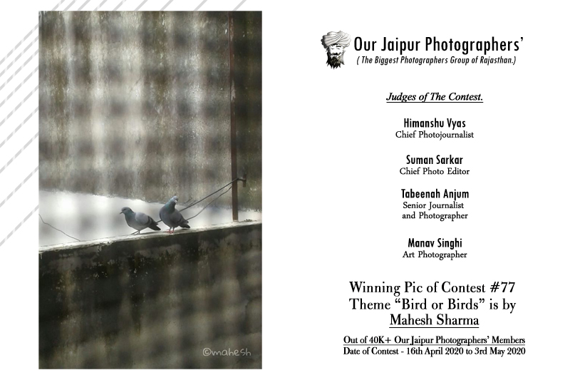 """The Winning Pic of Contest #77 Theme """"Bird or Birds"""" is by Mahesh Sharma"""