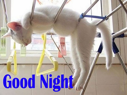 Funny Good Night Cat Picture