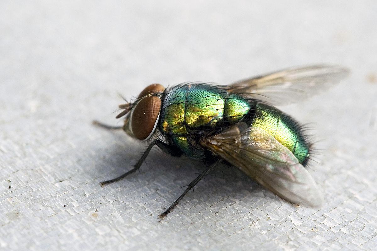 Anti moucherons maison fumigne insecticide teskad anti puces anti punaises de lit anti cafards - Que faire contre les mites ...