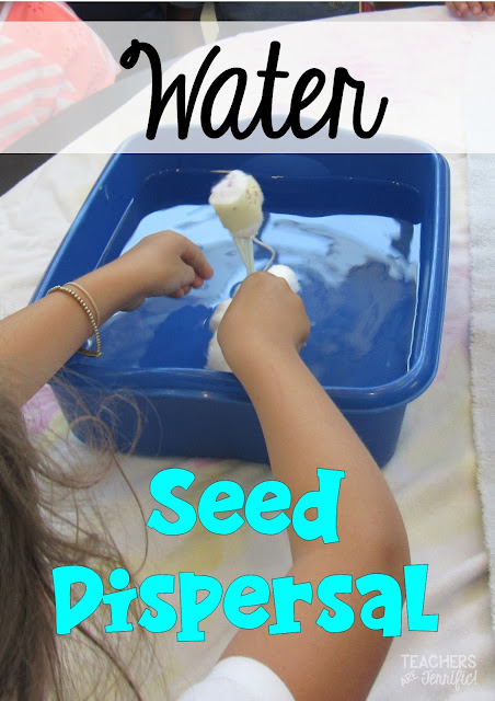 STEM Challenge with seeds! Students build a model to show how seeds travel by water to be dispersed.  Fantastic extension to use after you study plants and flower parts!